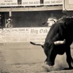 Bull Out Of The Pen
