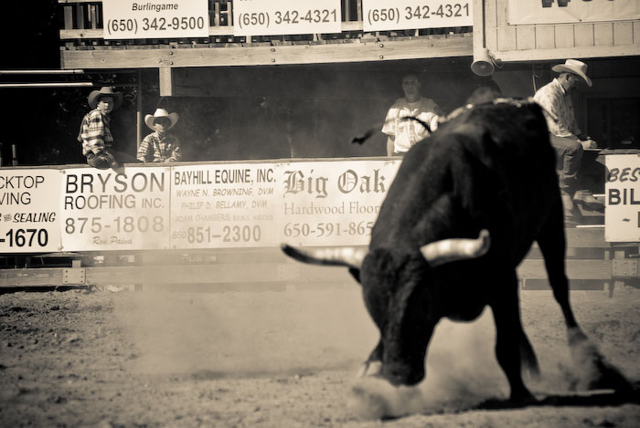 Bull riding at the junior rodeo in Woodside, CA