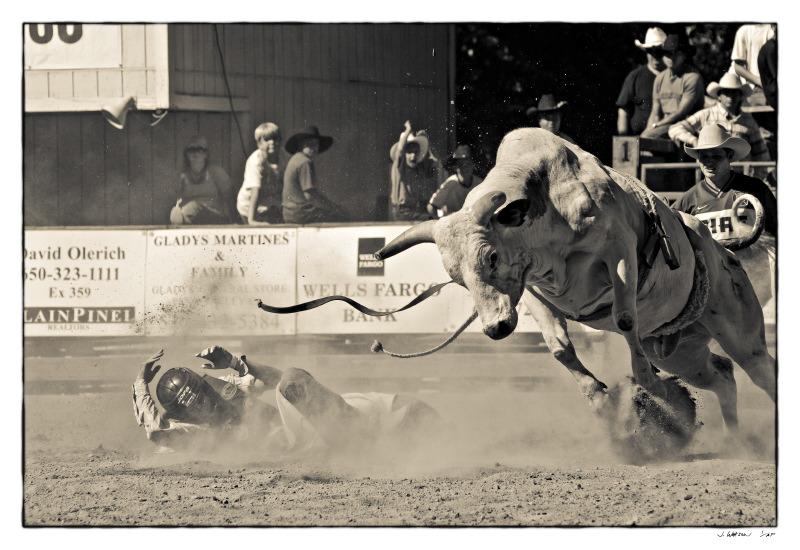 Bull rider at rodeo in Woodside, Ca